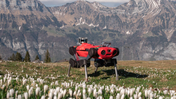 ANYmal robot locomotion capabilities in unstructured natural terrain