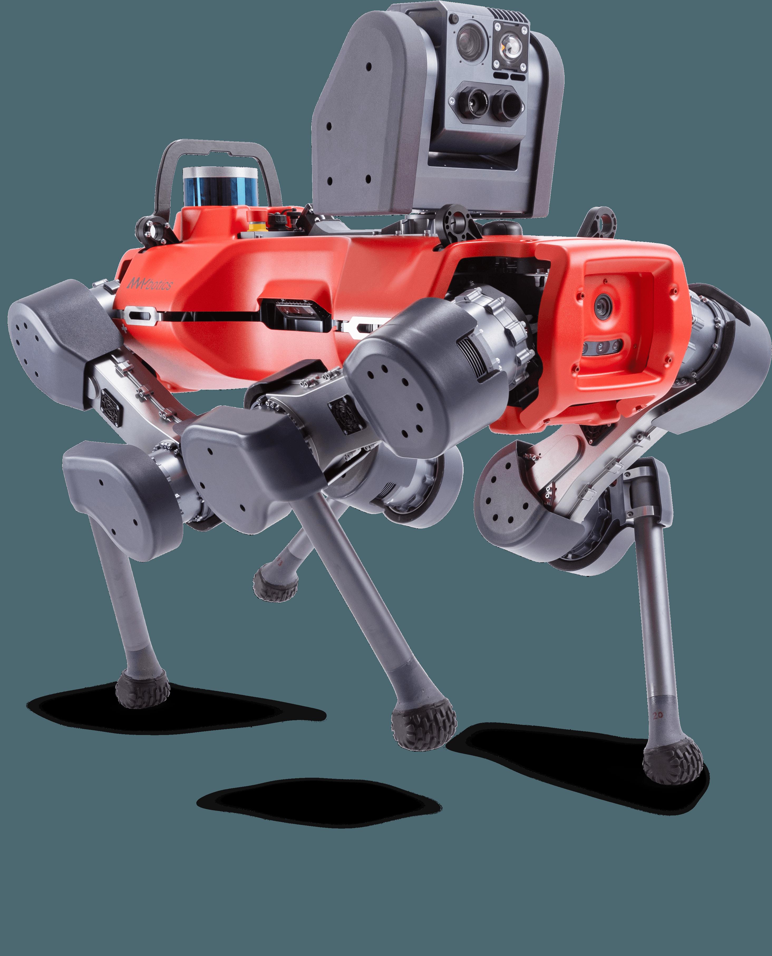 ANymal D legged robot walking